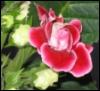 redrosewild userpic