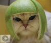 ninka_kiev: кошка-лайм
