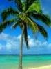 palmtree_love