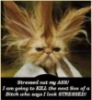kitty with a bad hair day