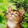 dream kitty котенок мечта