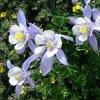 Douglas Triggs: wildflowers