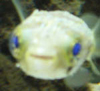 yoink_them_fish userpic
