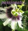 flora: passionfruit
