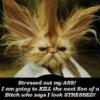 crazy, stress, frazzled