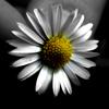 vanilli userpic