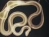 hypnobella userpic