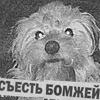 kikkert: собака