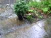 rainsplashy userpic