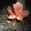 phoebeanne userpic