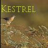 kestrelsparhawk: sparrowhawk