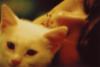 blackcat_cliche userpic