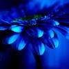 Ночной цветочек