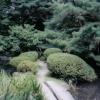 falling_blossom userpic