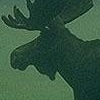 legalmoose userpic