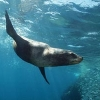 diving_seals userpic