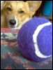 zabigdog userpic