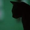 mitaxondria userpic