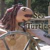 Captain Jack Sea Turtle