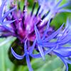 botias userpic