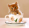 Jae: Kitten in a cup