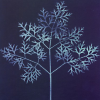 Up Too Late: blue tree