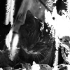 psychacat userpic