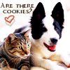 bookaddict43: is there cookies