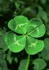 ms_irish userpic