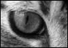 graypcat