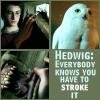 Harry- Stroke it