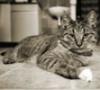mike_shin: Кошак