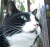camperovich: enoshima cat
