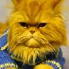 haggis_cat userpic