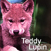 teddylupin
