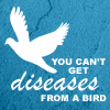 obursts: Diseases from a Bird