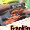 lizard, newt
