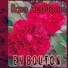 ausbloom_bouton userpic