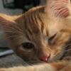 kitten wink