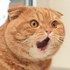 Knorg Knorgsson: Shocked Cat