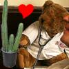 live action bear/cactus