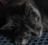 nekosensei: Cosette -- sleeping