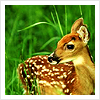 silktaffeta userpic