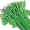 celerypie userpic