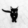 Katkim: Cat