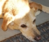 dejected dog