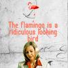 senseless things: [CJ] flamingo // so_bambiesque