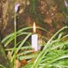 Scotland - Dunino Candle