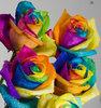 Teal: rainbow roses