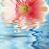 flower/water